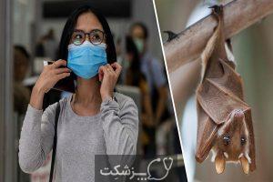 خفاش های مبتلا به ویروس کرونا 4 | پزشکت