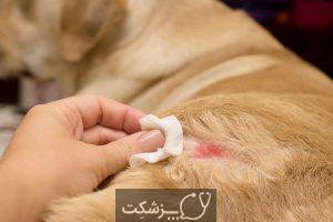 بیماری های پوستی در سگ و گربه | پزشکت