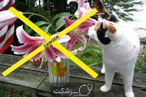 مسمومیت گربه با گل سوسن 2 | پزشکت