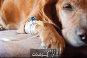 بیماری های کبدی در سگ ها (1)