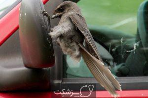 استرس در پرندگان خانگی 1   پزشکت