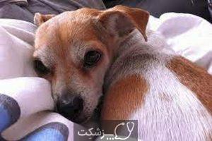 بیماری های کبدی در سگ ها 1 | پزشکت