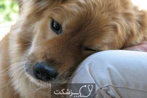 استرس در حیوانات خانگی 3 | پزشکت