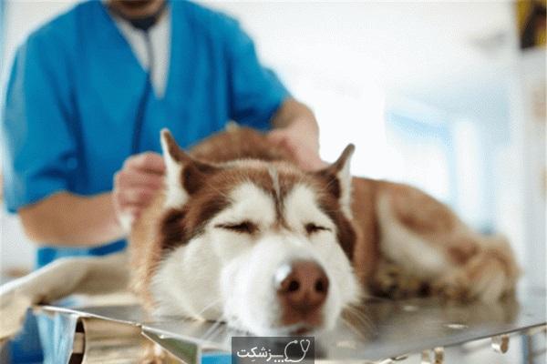 بیماری های کبدی در سگ ها 2 | پزشکت