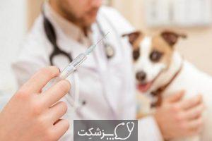 مراقبت از سگ ها در بارداری 1 | پزشکت