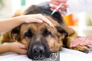 بیماری های کبدی در سگ ها (2)
