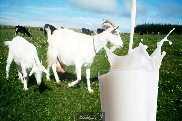 شیر بز و سلامت قلب 3   پزشکت