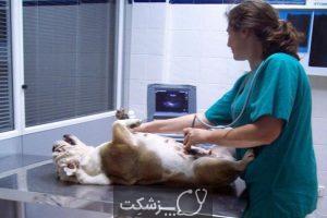 مراقبت از سگ ها در بارداری 4 | پزشکت