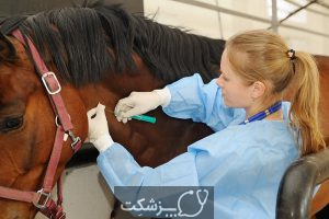 شایع ترین علل مرگ ناگهانی اسب ها