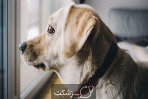 استرس در حیوانات خانگی 5 | پزشکت