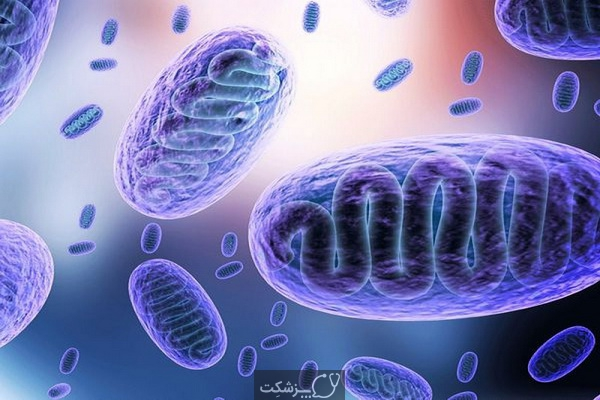 قارچ سیاه و کرونا ویروس 1 | پزشکت