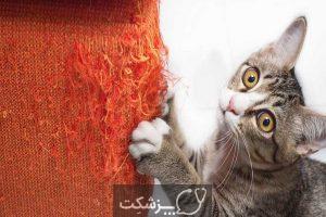 استرس در حیوانات خانگی - سپند جام