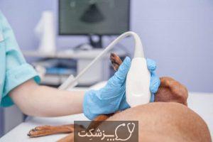 مراقبت از سگ ها در بارداری 3 | پزشکت