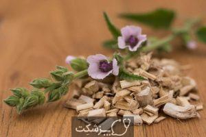 9 خواص درمانی ریشه گل ختمی و عوارض آن | پزشکت